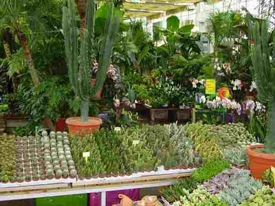 combien de fois par semaine arroser ses cactus aix la garde hyeres port grimaud villaverde. Black Bedroom Furniture Sets. Home Design Ideas