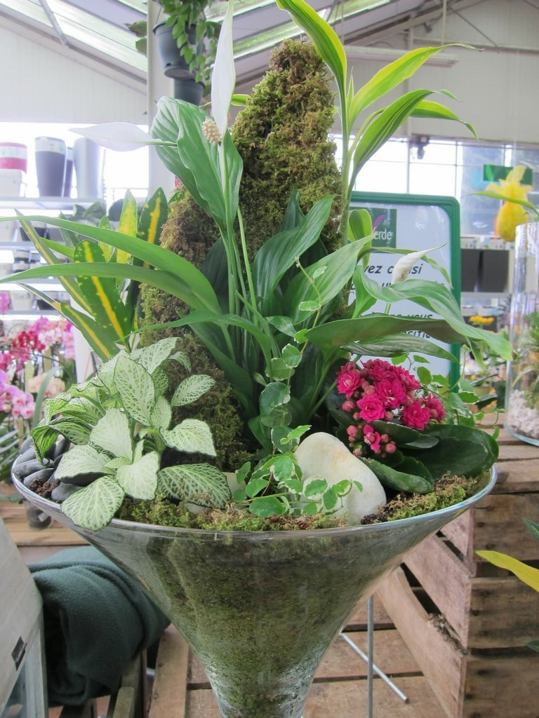Plantes d 39 int rieur aix la garde hyeres port grimaud for Rocchietta la garde