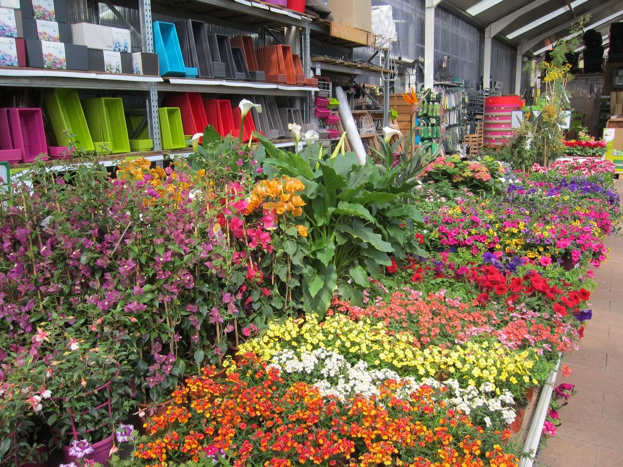 Plantes pour balcons et terrasses aix la garde hyeres port grimaud villaverde rocchietta for Plantes pour terrasses