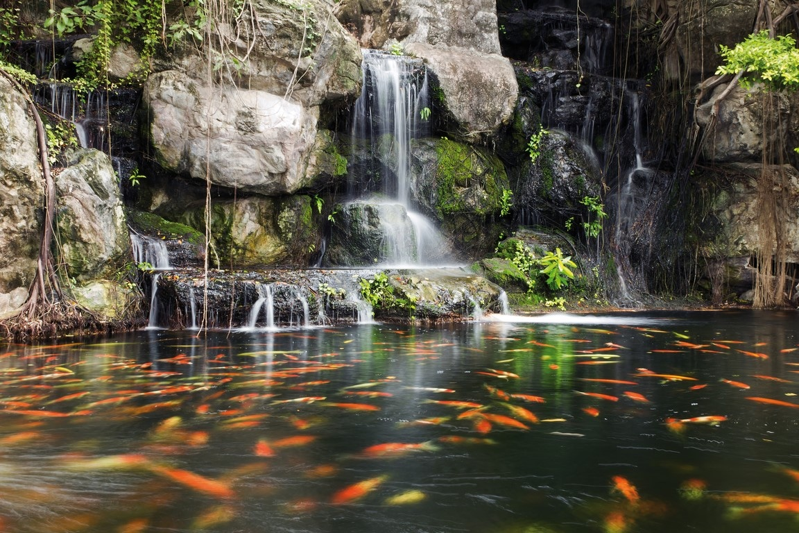 Accessoires Poisson Bassin