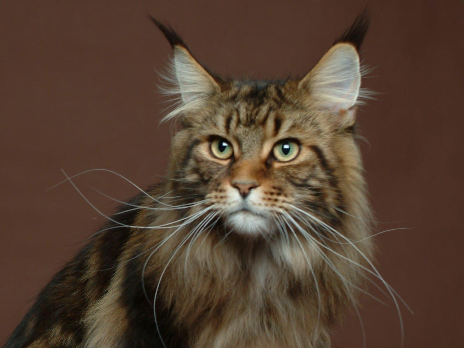 chat Fréjus