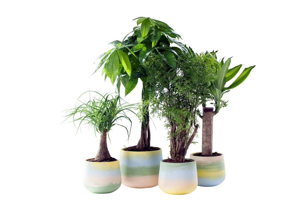 plante interieur villaverde
