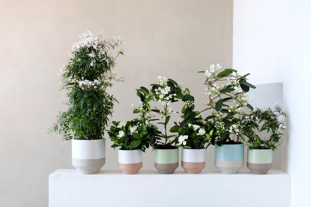 A Chaque Mois Sa Plante, mars 2016 : les Fleurs blanches parfumées