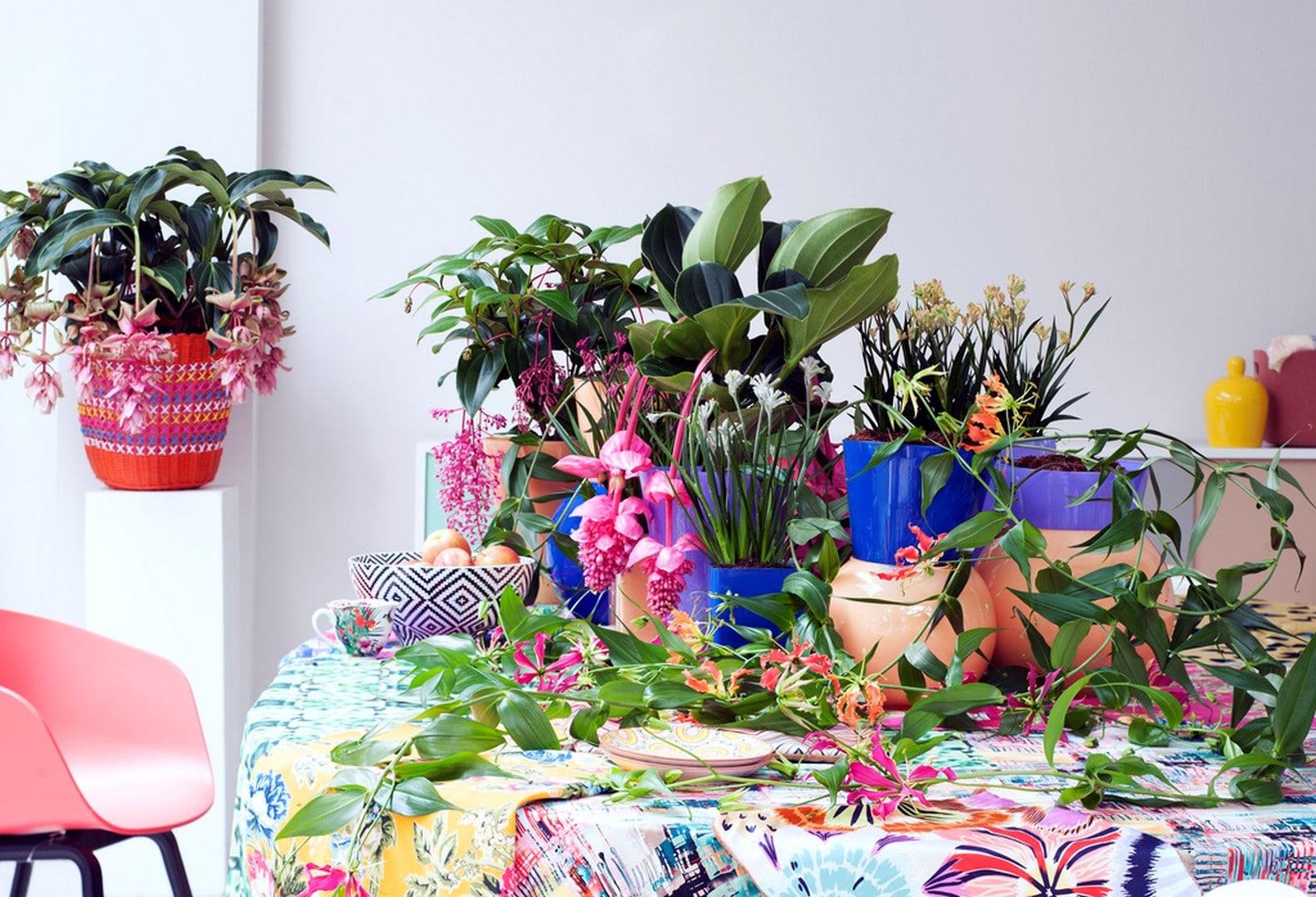 A Chaque Mois Sa Plante, mai 2016 : les Beautés tropicales