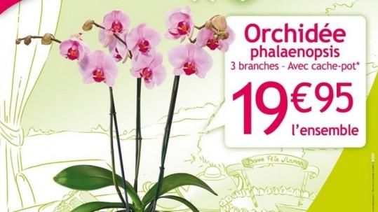 Fete_des_meres_Villaverde_2016_abribus_120x176_Orchidee (rocchietta)
