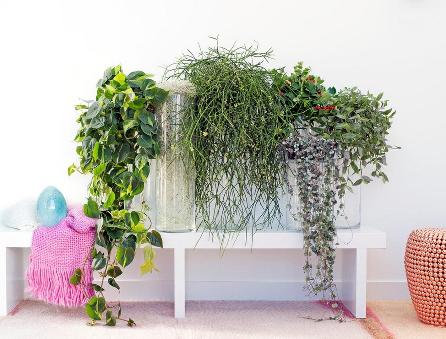 A Chaque Mois Sa Plante, septembre 2016 : les Plantes retombantes