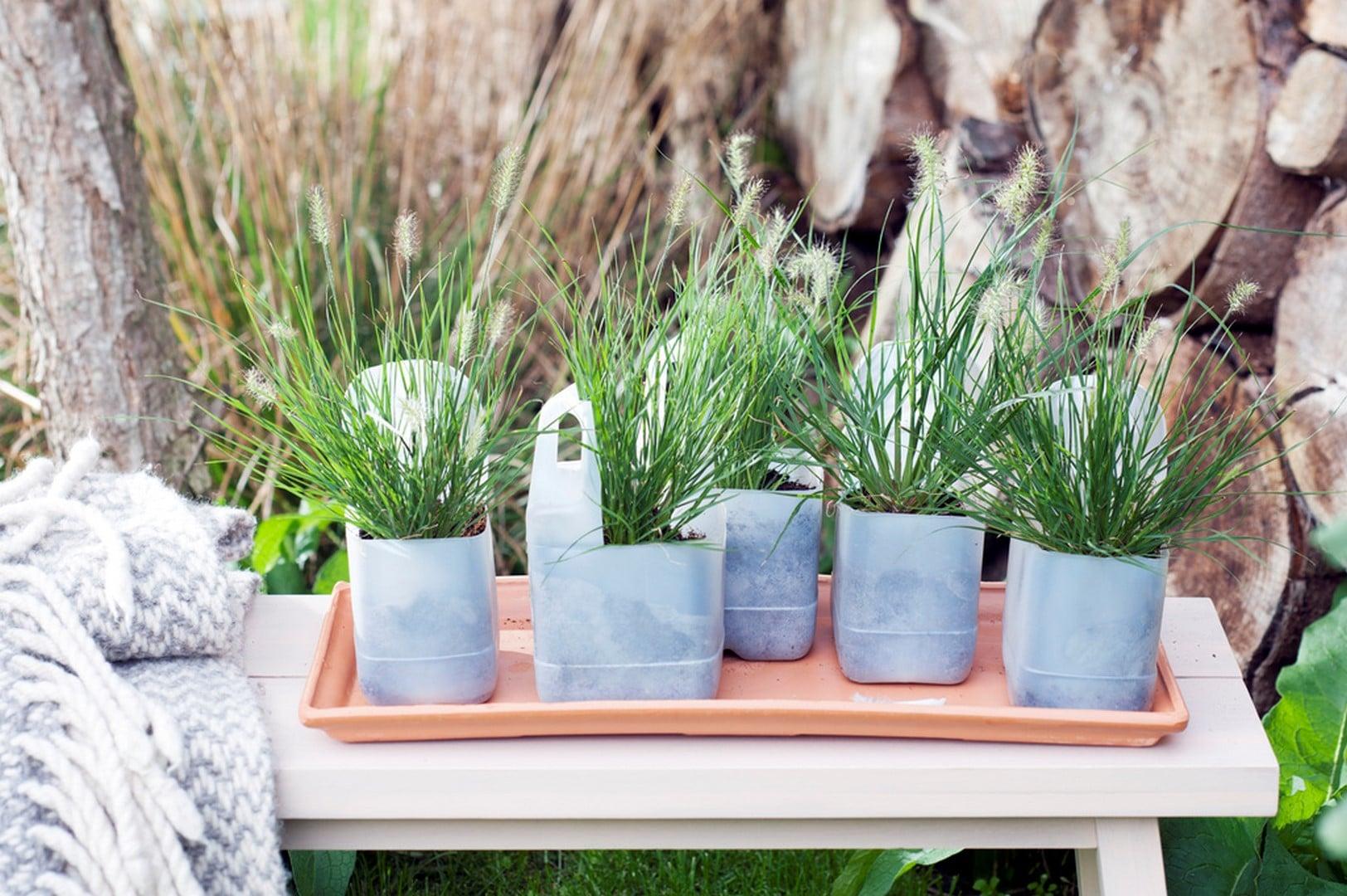 Plante de jardin du mois de septembre 2016 : Herbe aux écouvillons