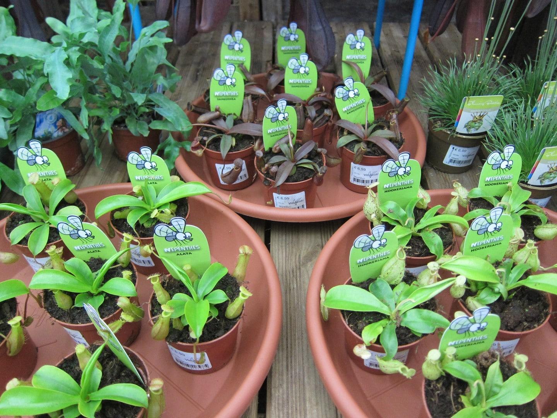 Plantes carnivores 1rocchietta aix la garde hyeres port for Rocchietta la garde