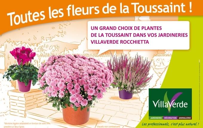 un grand choix de chrysanthemes pour la Toussaint est disponible dans vos jardineries villaverde Rocchietta d' Aix en Provence,Port Grimaud,la Garde, Hyères, le Beausset et Fréjus.