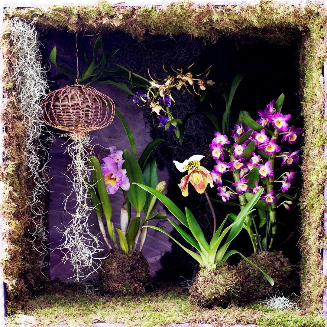 A Chaque Mois Sa Plante, novembre : les Orchidées d'exception