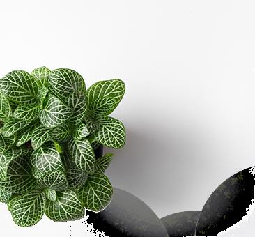 plante d'une jardinerie en paca