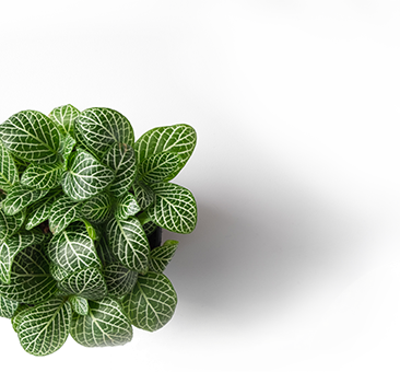 villaverde rocchietta jardinerie d coration animalerie en provence. Black Bedroom Furniture Sets. Home Design Ideas