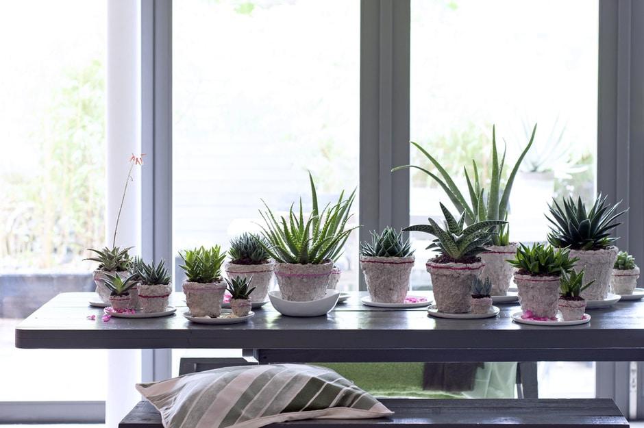 A Chaque Mois Sa Plante, Août 2017 : l'Aloe