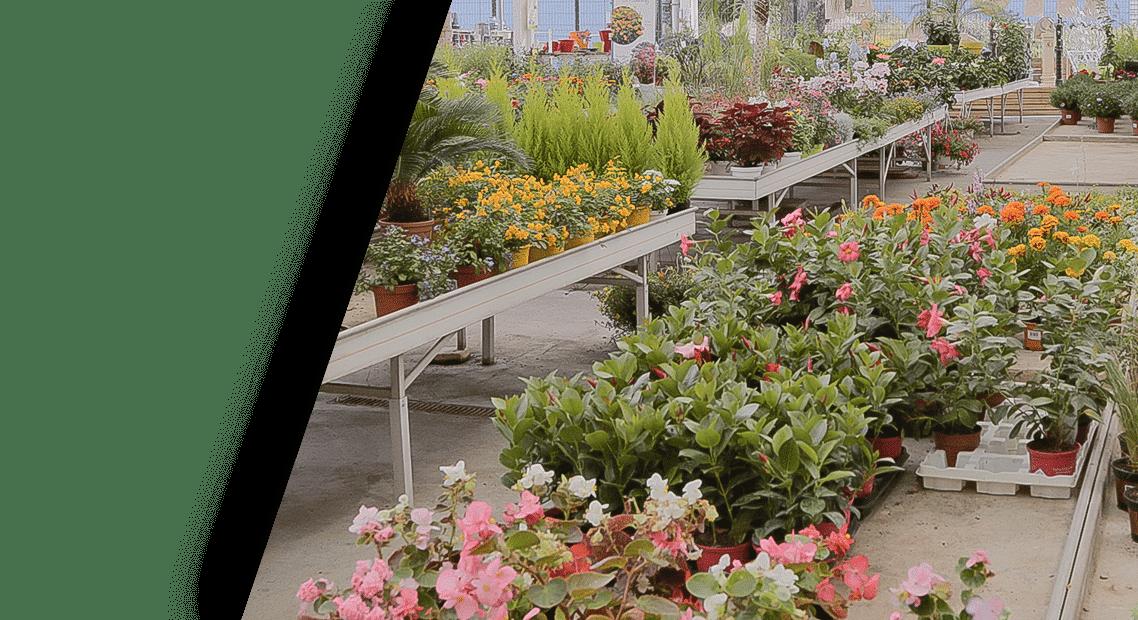 villaverde rocchietta jardinerie d233coration animalerie